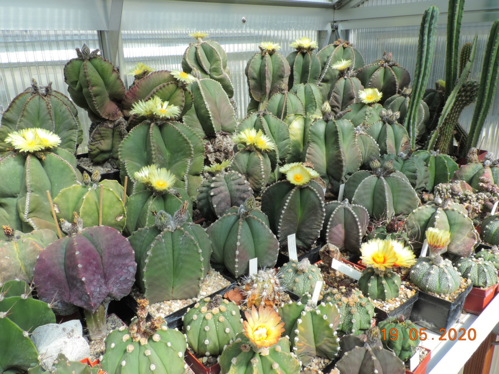 Cacti and Sukkulent in Köln, every day new flowers in the greenhouse Part 234 Bild5291