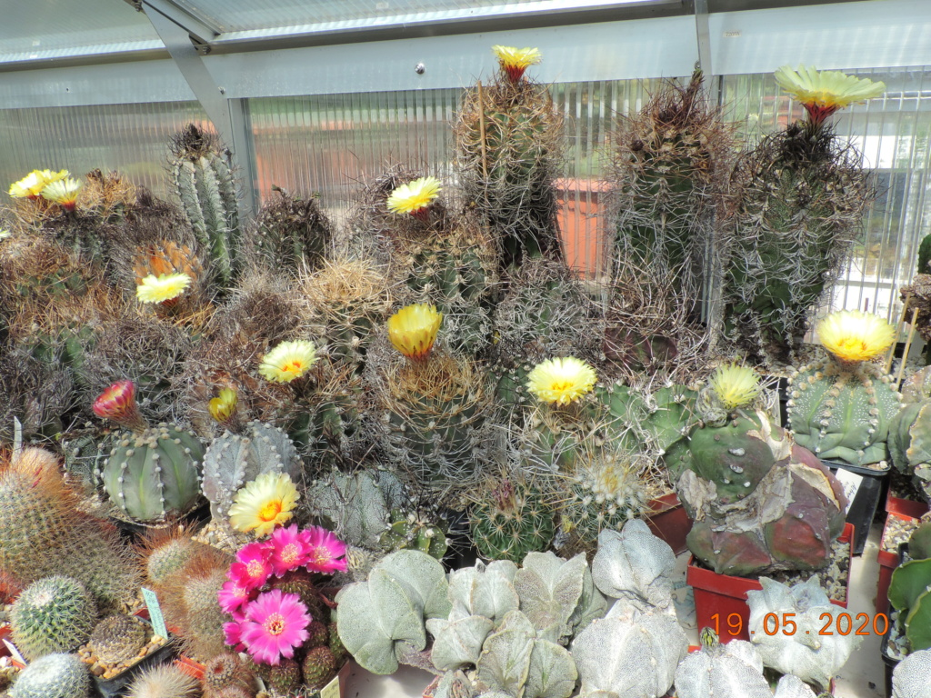 Cacti and Sukkulent in Köln, every day new flowers in the greenhouse Part 234 Bild5292