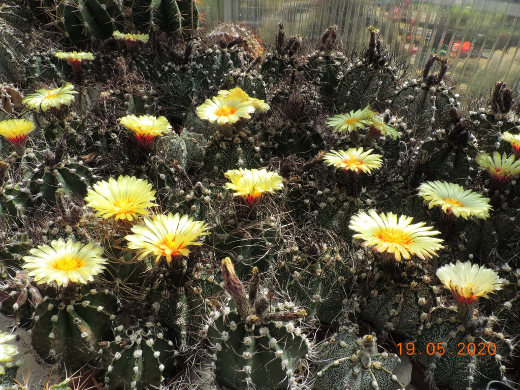 Cacti and Sukkulent in Köln, every day new flowers in the greenhouse Part 234 Bild5294