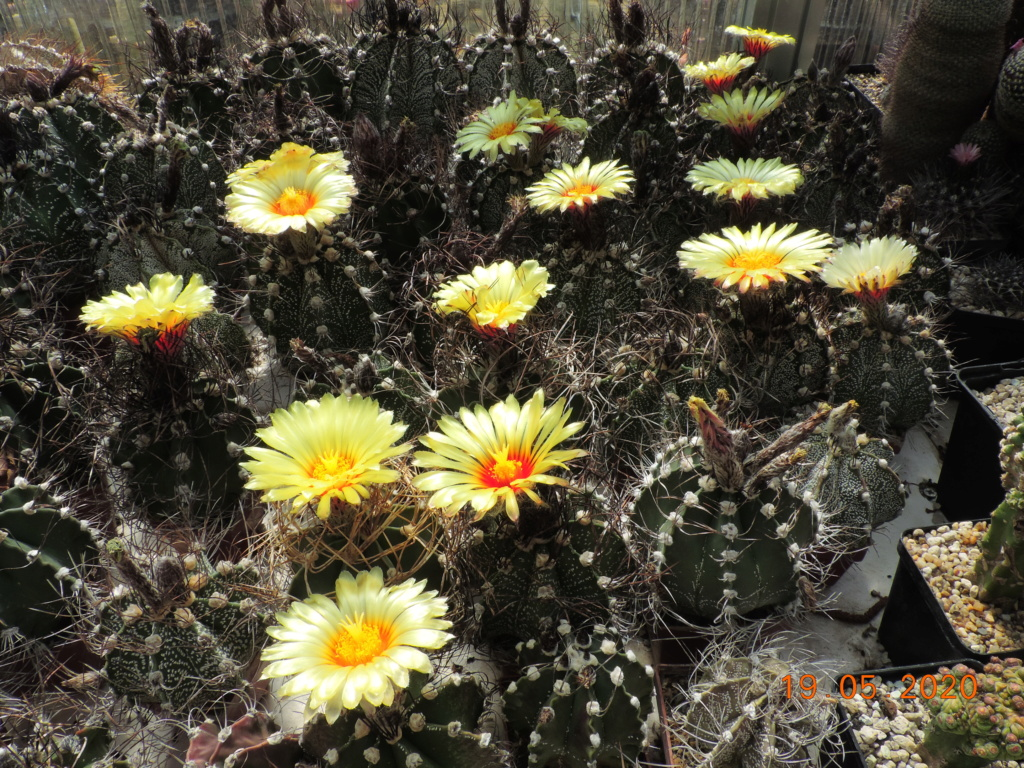 Cacti and Sukkulent in Köln, every day new flowers in the greenhouse Part 234 Bild5295