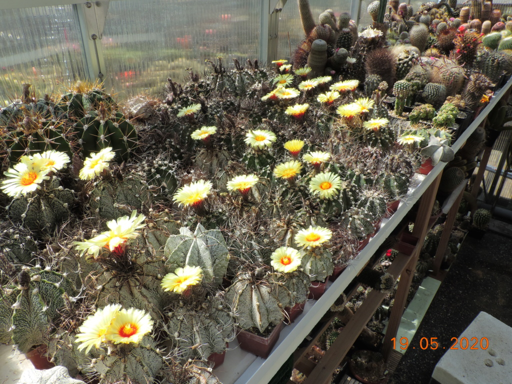 Cacti and Sukkulent in Köln, every day new flowers in the greenhouse Part 234 Bild5296