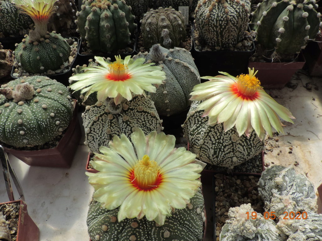 Cacti and Sukkulent in Köln, every day new flowers in the greenhouse Part 234 Bild5297