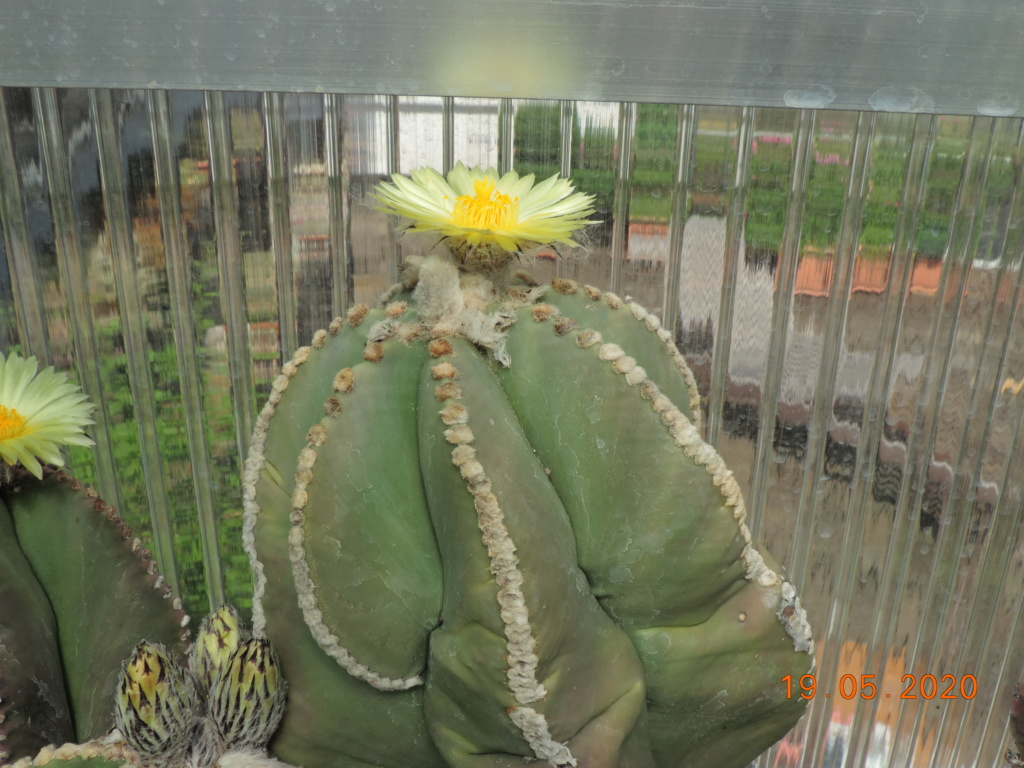 Cacti and Sukkulent in Köln, every day new flowers in the greenhouse Part 234 Bild5300