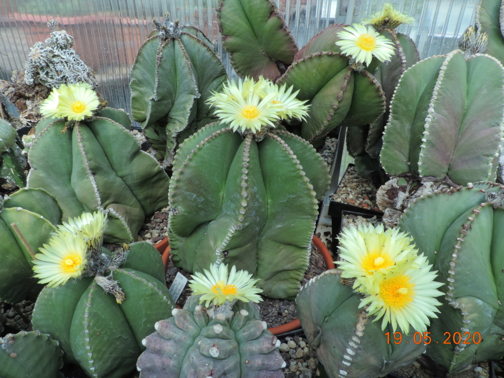 Cacti and Sukkulent in Köln, every day new flowers in the greenhouse Part 234 Bild5303