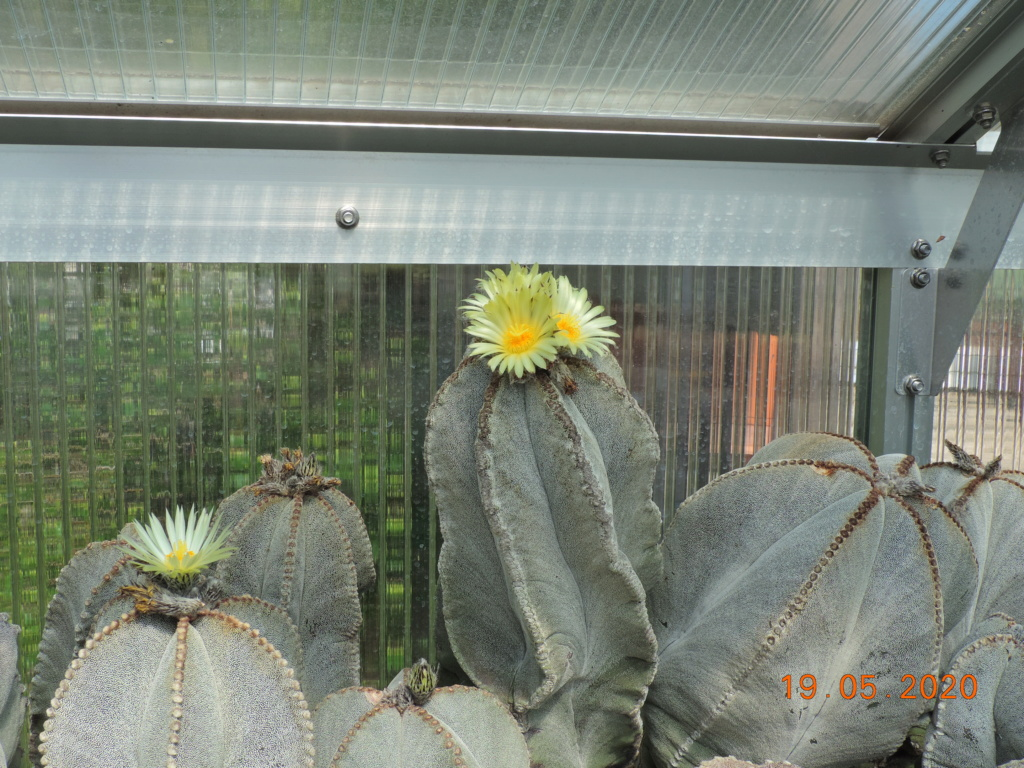 Cacti and Sukkulent in Köln, every day new flowers in the greenhouse Part 234 Bild5310