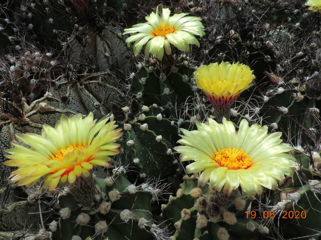 Cacti and Sukkulent in Köln, every day new flowers in the greenhouse Part 234 Bild5316