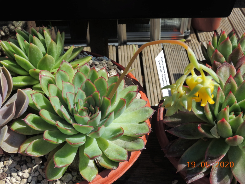 Cacti and Sukkulent in Köln, every day new flowers in the greenhouse Part 234 Bild5318