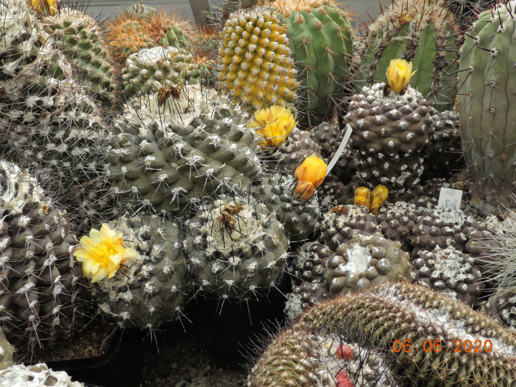 Cacti and Sukkulent in Köln, every day new flowers in the greenhouse Part 237 Bild5509
