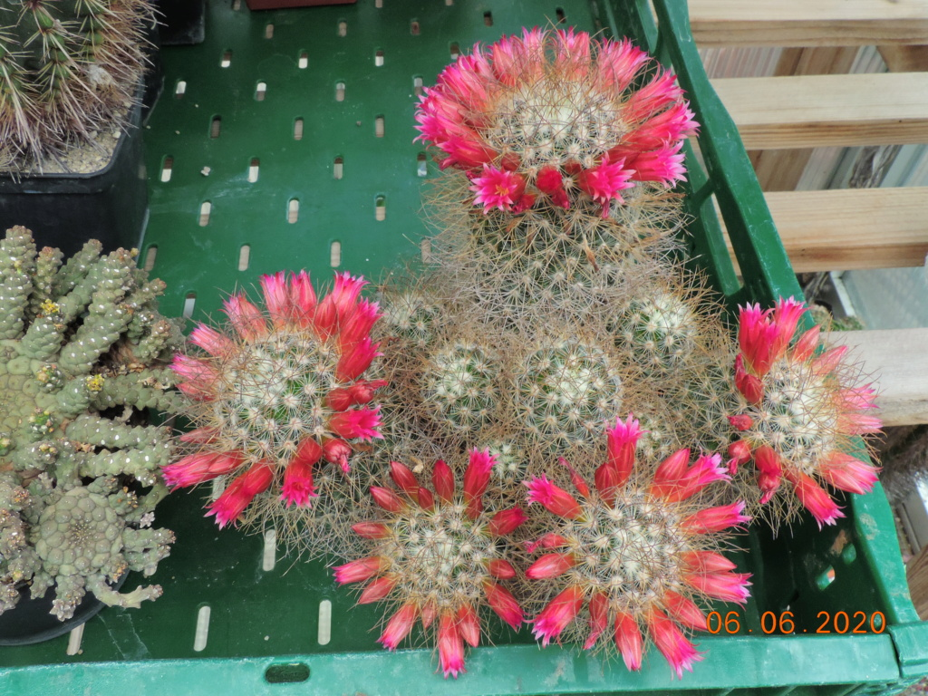 Cacti and Sukkulent in Köln, every day new flowers in the greenhouse Part 237 Bild5513