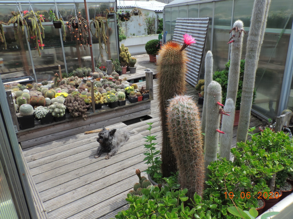 Cacti and Sukkulent in Köln, every day new flowers in the greenhouse Part 237 Bild5531