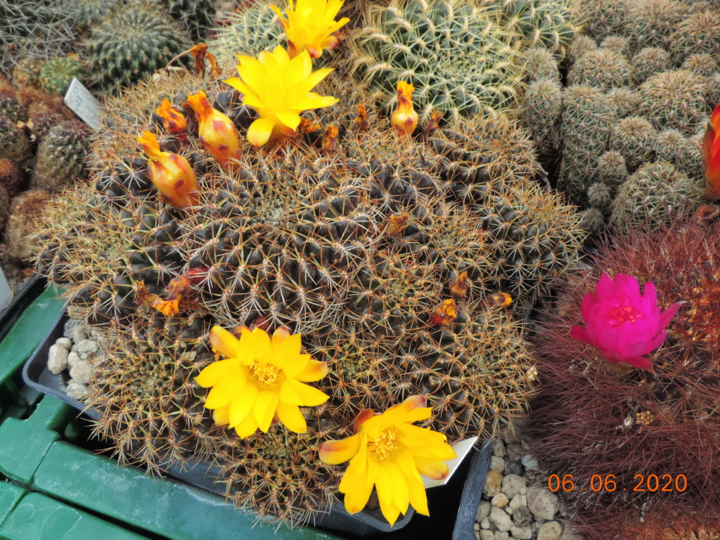 Cacti and Sukkulent in Köln, every day new flowers in the greenhouse Part 237 Bild5541
