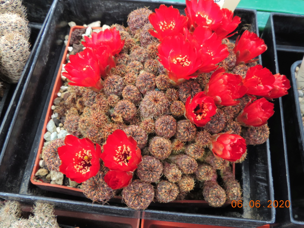 Cacti and Sukkulent in Köln, every day new flowers in the greenhouse Part 237 Bild5549