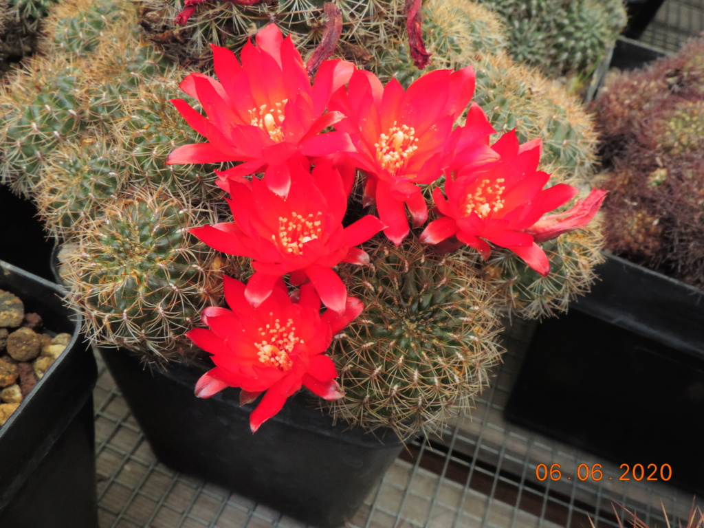 Cacti and Sukkulent in Köln, every day new flowers in the greenhouse Part 237 Bild5553