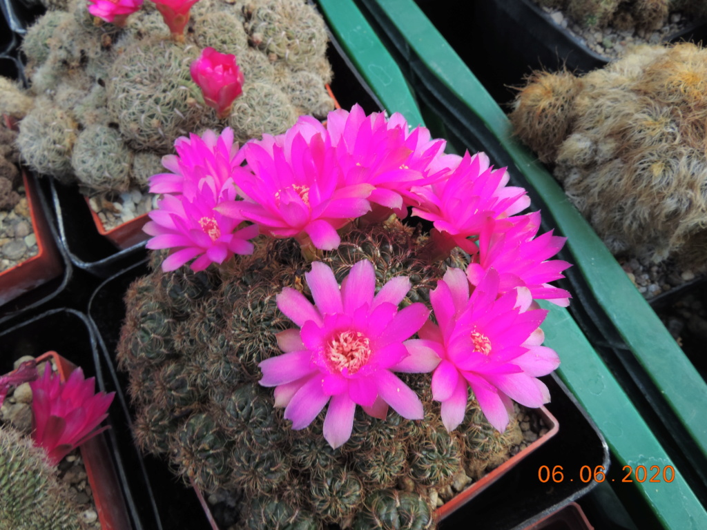 Cacti and Sukkulent in Köln, every day new flowers in the greenhouse Part 237 Bild5556