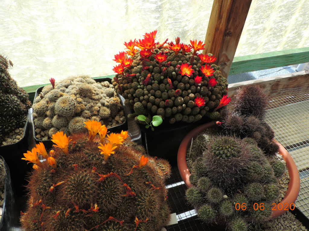 Cacti and Sukkulent in Köln, every day new flowers in the greenhouse Part 237 Bild5557