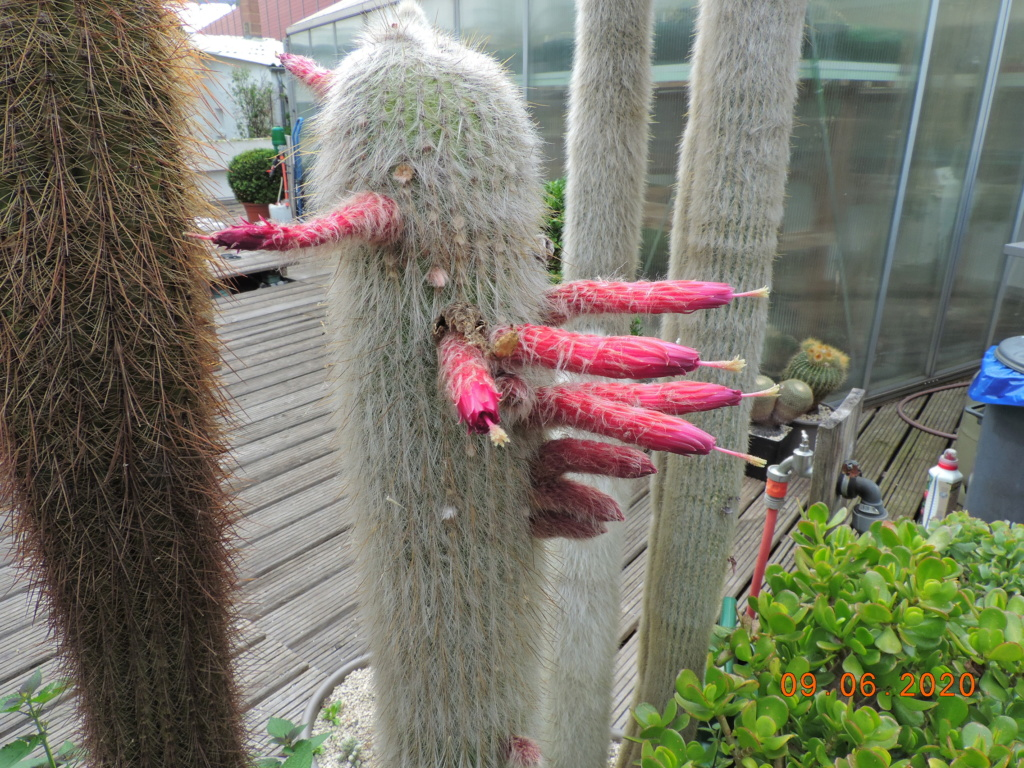Cacti and Sukkulent in Köln, every day new flowers in the greenhouse Part 237 Bild5568