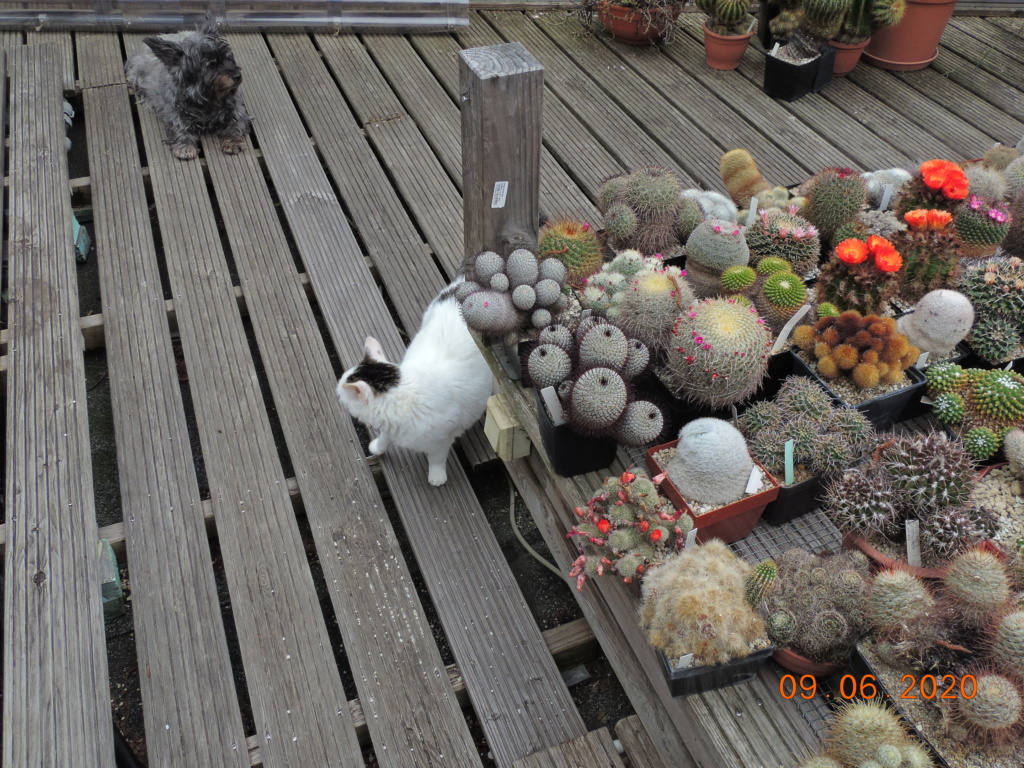 Cacti and Sukkulent in Köln, every day new flowers in the greenhouse Part 237 Bild5574