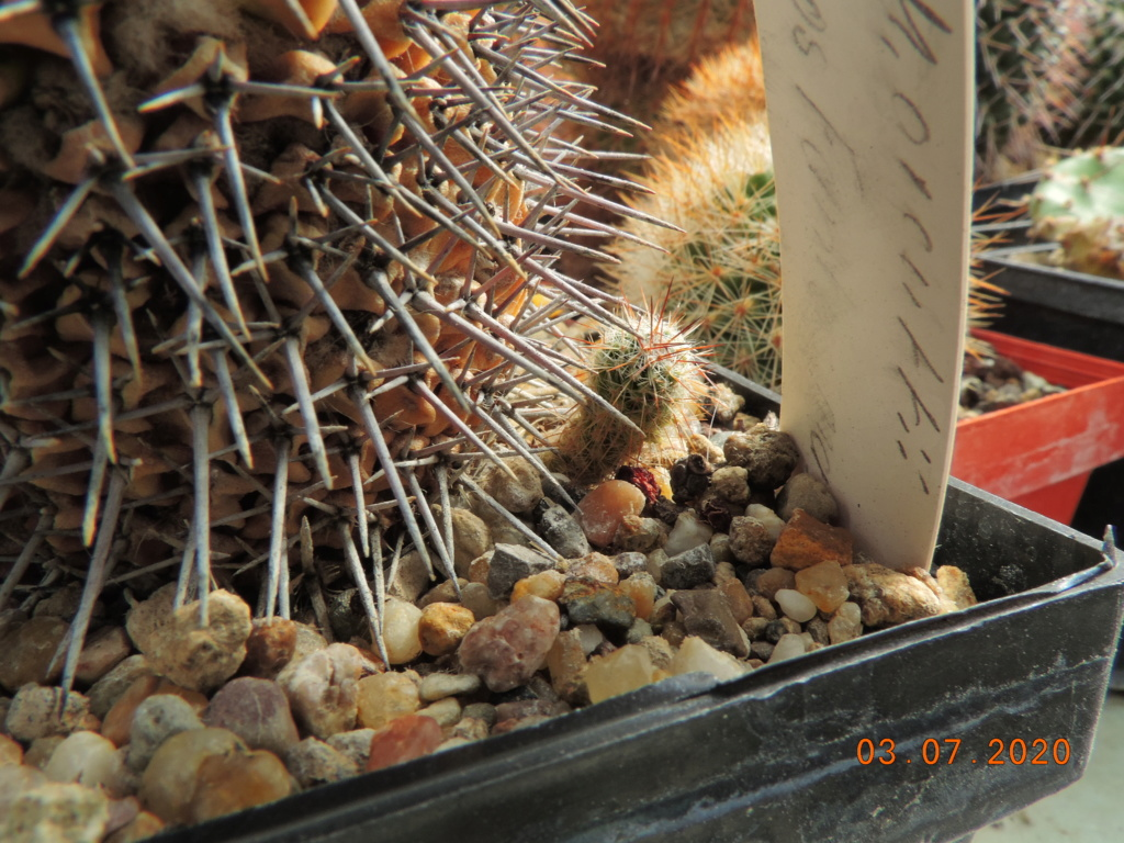 Cacti and Sukkulent in Köln, every day new flowers in the greenhouse Part 237 Bild5600