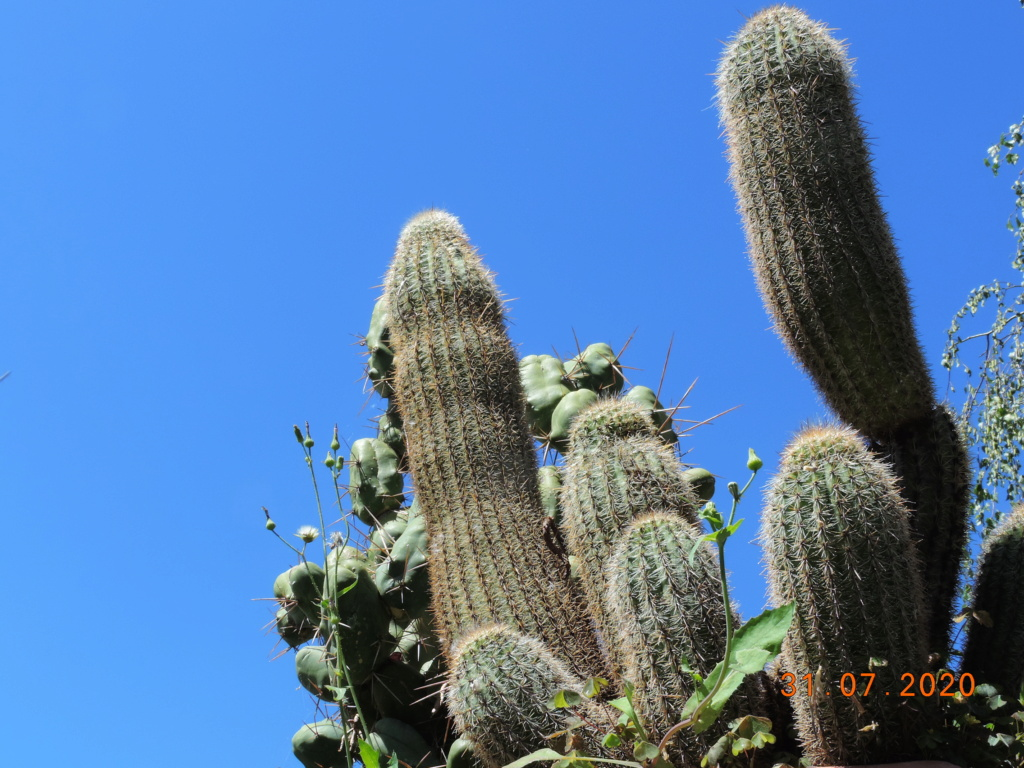 Cacti and Sukkulent in Köln, every day new flowers in the greenhouse Part 240 Bild5813