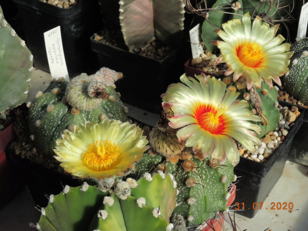 Cacti and Sukkulent in Köln, every day new flowers in the greenhouse Part 240 Bild5817