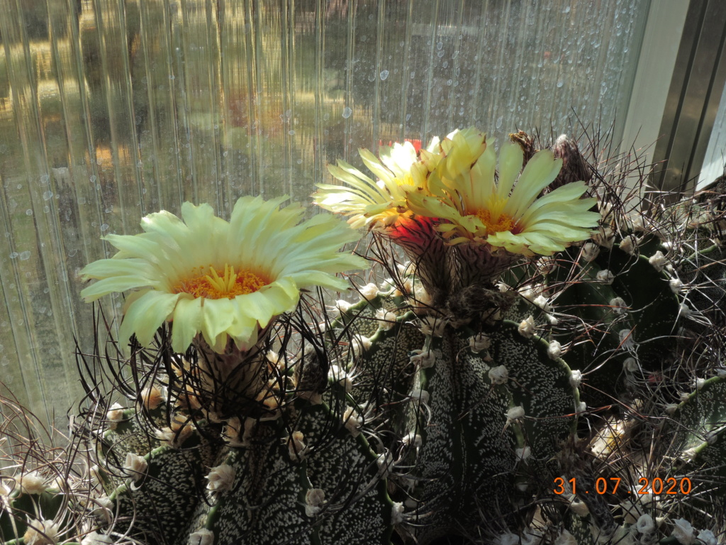 Cacti and Sukkulent in Köln, every day new flowers in the greenhouse Part 240 Bild5821