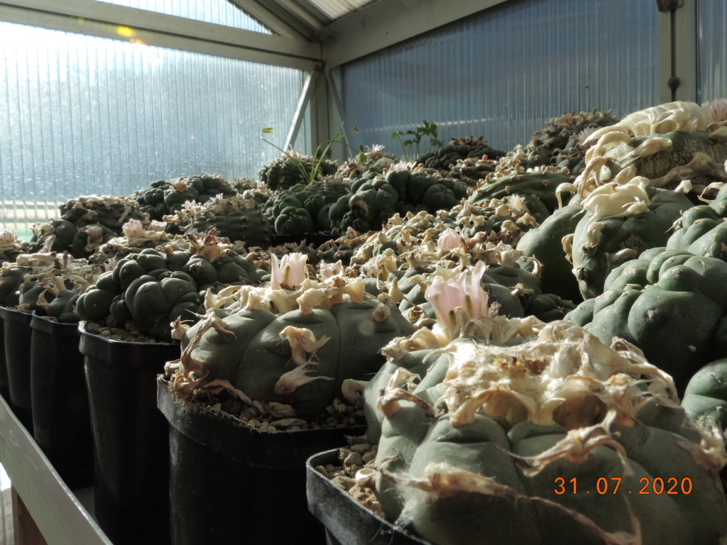 Cacti and Sukkulent in Köln, every day new flowers in the greenhouse Part 240 Bild5823