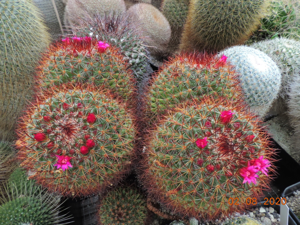 Cacti and Sukkulent in Köln, every day new flowers in the greenhouse Part 240 Bild5825