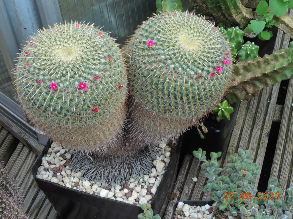 Cacti and Sukkulent in Köln, every day new flowers in the greenhouse Part 240 Bild5830