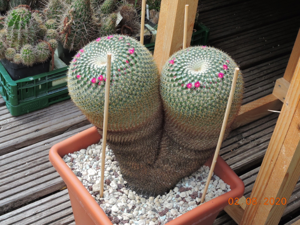 Cacti and Sukkulent in Köln, every day new flowers in the greenhouse Part 240 Bild5831