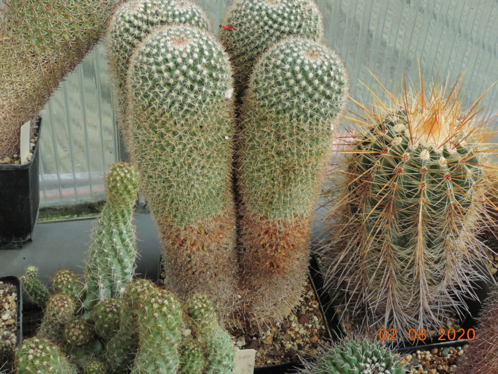 Cacti and Sukkulent in Köln, every day new flowers in the greenhouse Part 240 Bild5835