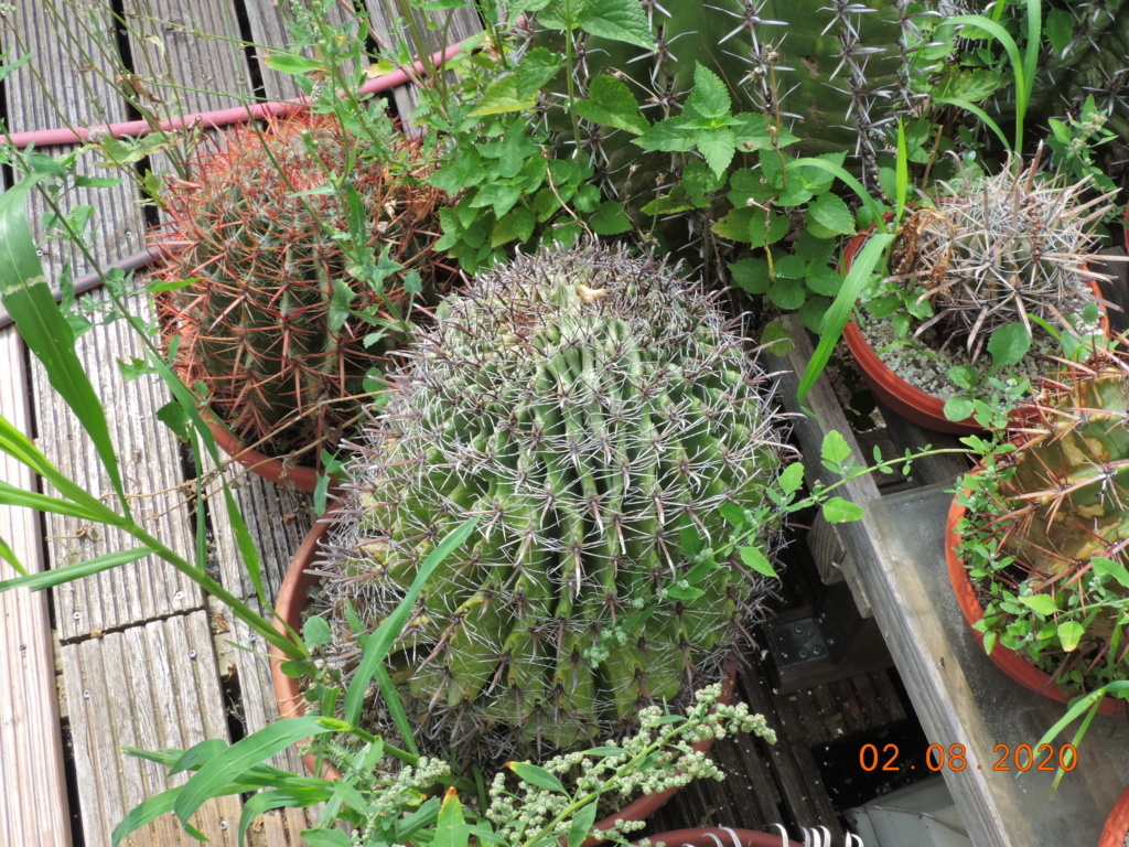 Cacti and Sukkulent in Köln, every day new flowers in the greenhouse Part 240 Bild5838