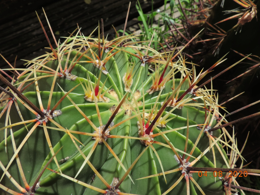 Cacti and Sukkulent in Köln, every day new flowers in the greenhouse Part 240 Bild5843