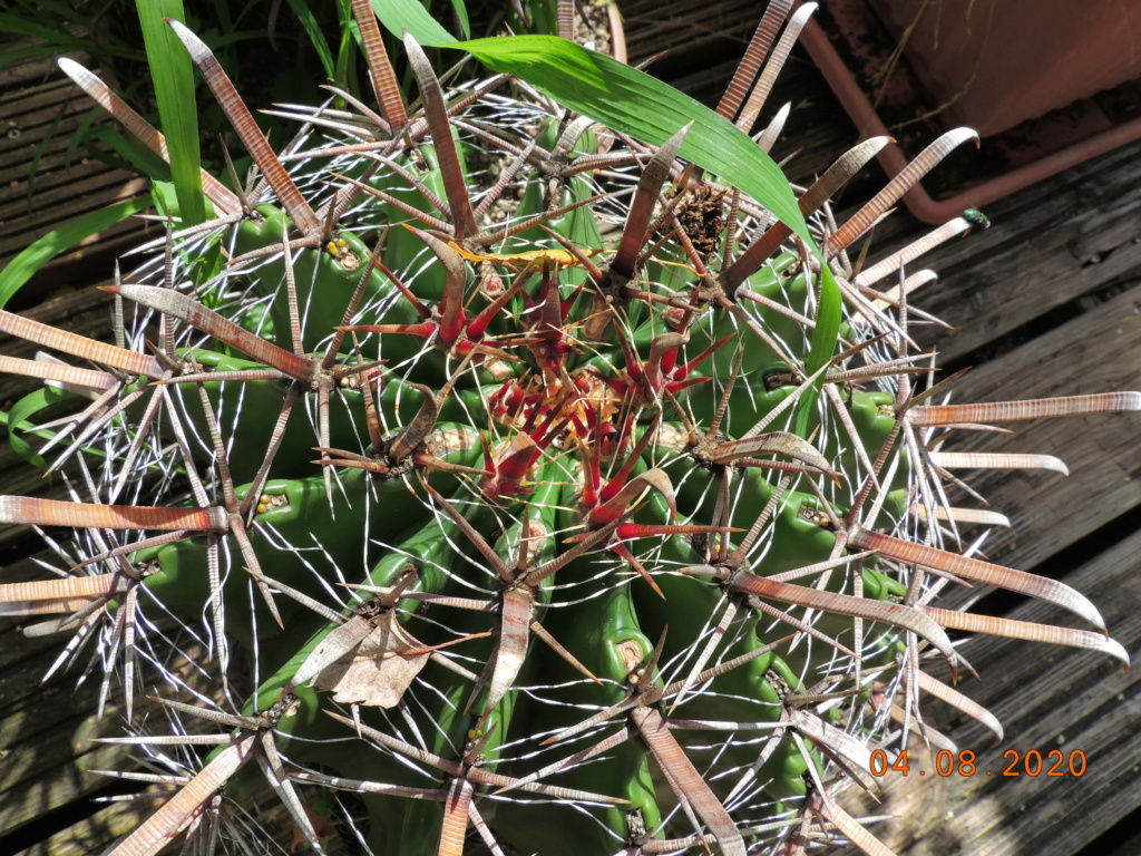 Cacti and Sukkulent in Köln, every day new flowers in the greenhouse Part 240 Bild5845