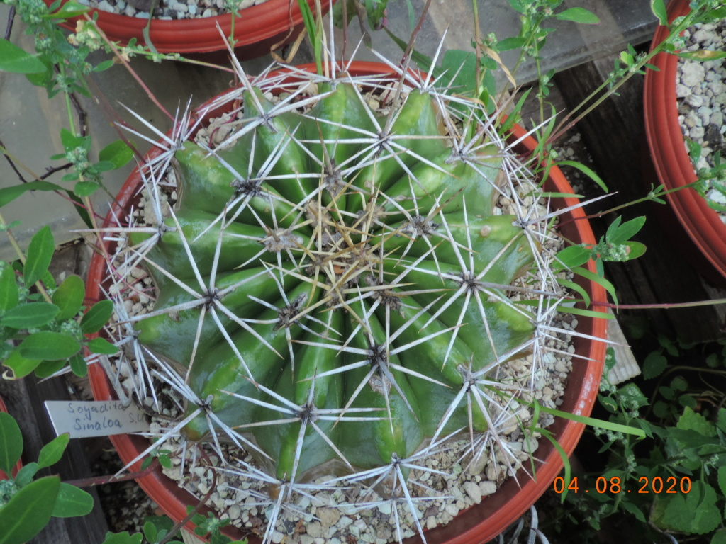 Cacti and Sukkulent in Köln, every day new flowers in the greenhouse Part 240 Bild5858