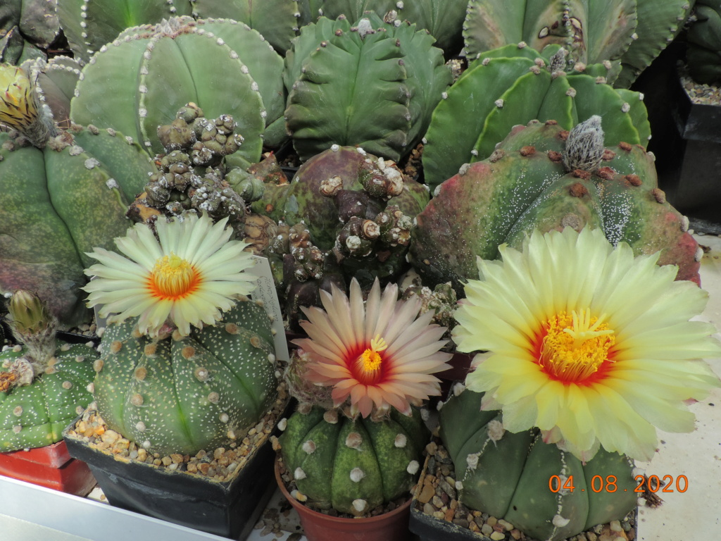 Cacti and Sukkulent in Köln, every day new flowers in the greenhouse Part 240 Bild5865