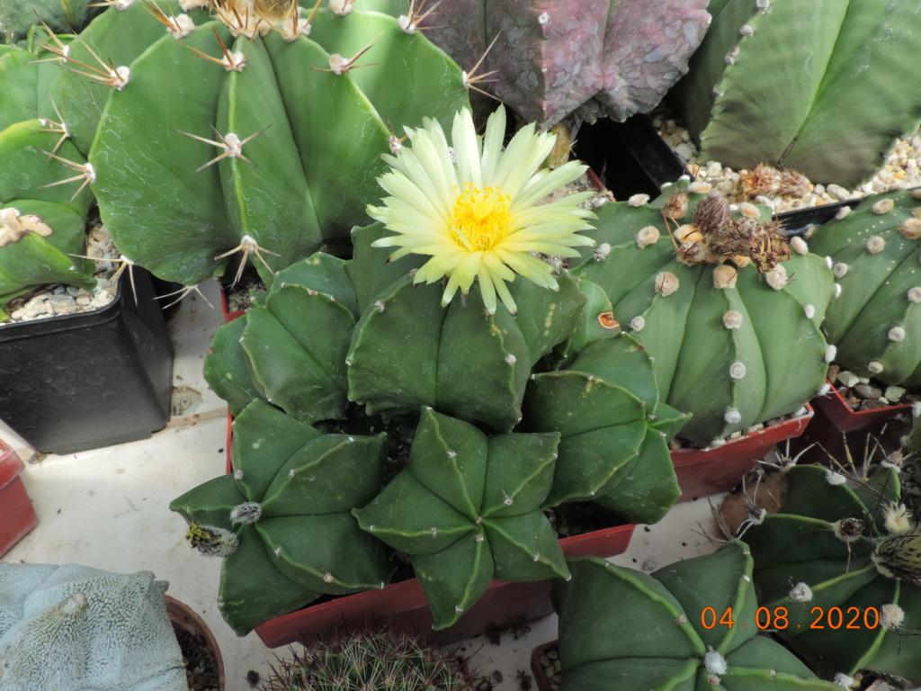 Cacti and Sukkulent in Köln, every day new flowers in the greenhouse Part 240 Bild5868