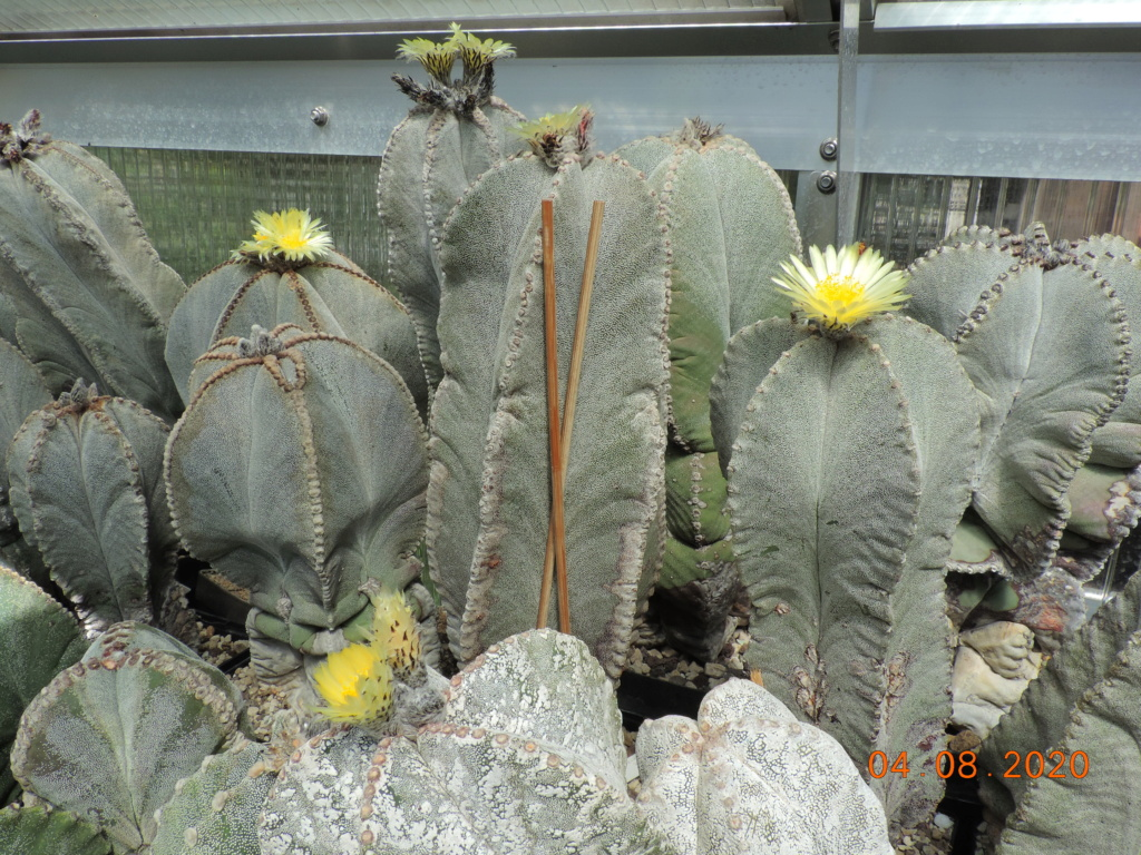 Cacti and Sukkulent in Köln, every day new flowers in the greenhouse Part 240 Bild5873