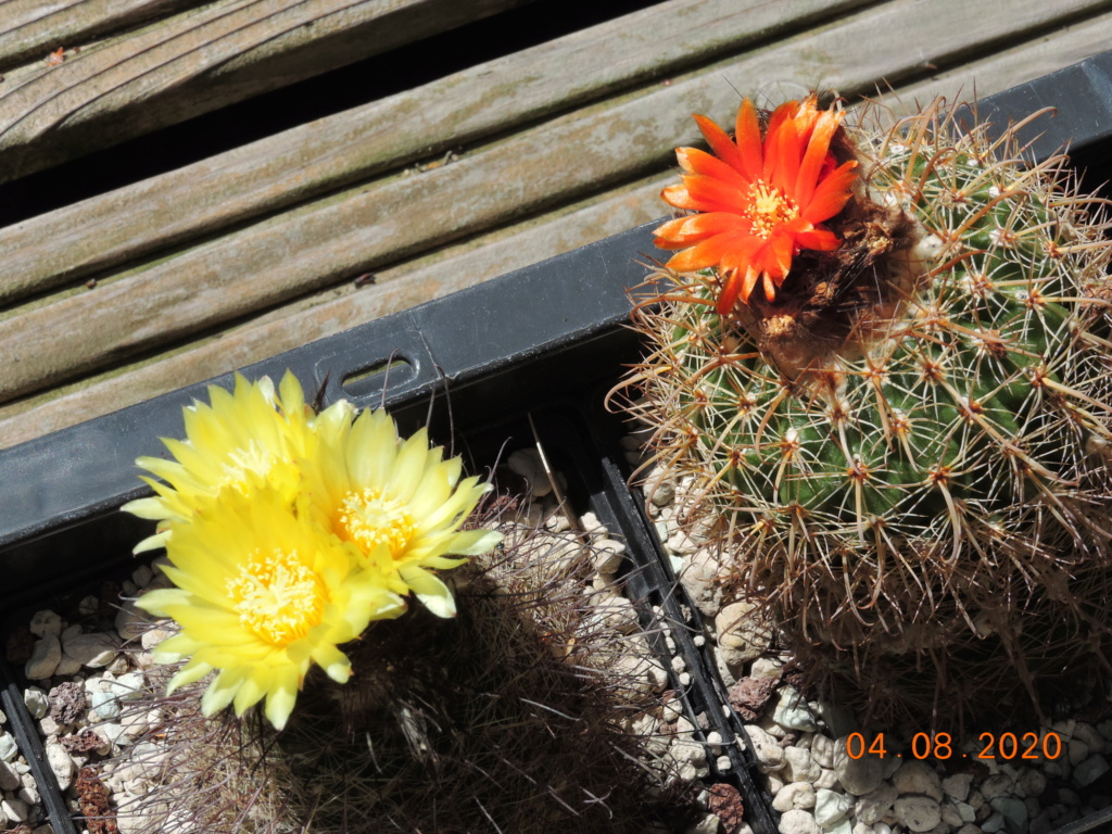 Cacti and Sukkulent in Köln, every day new flowers in the greenhouse Part 240 Bild5890