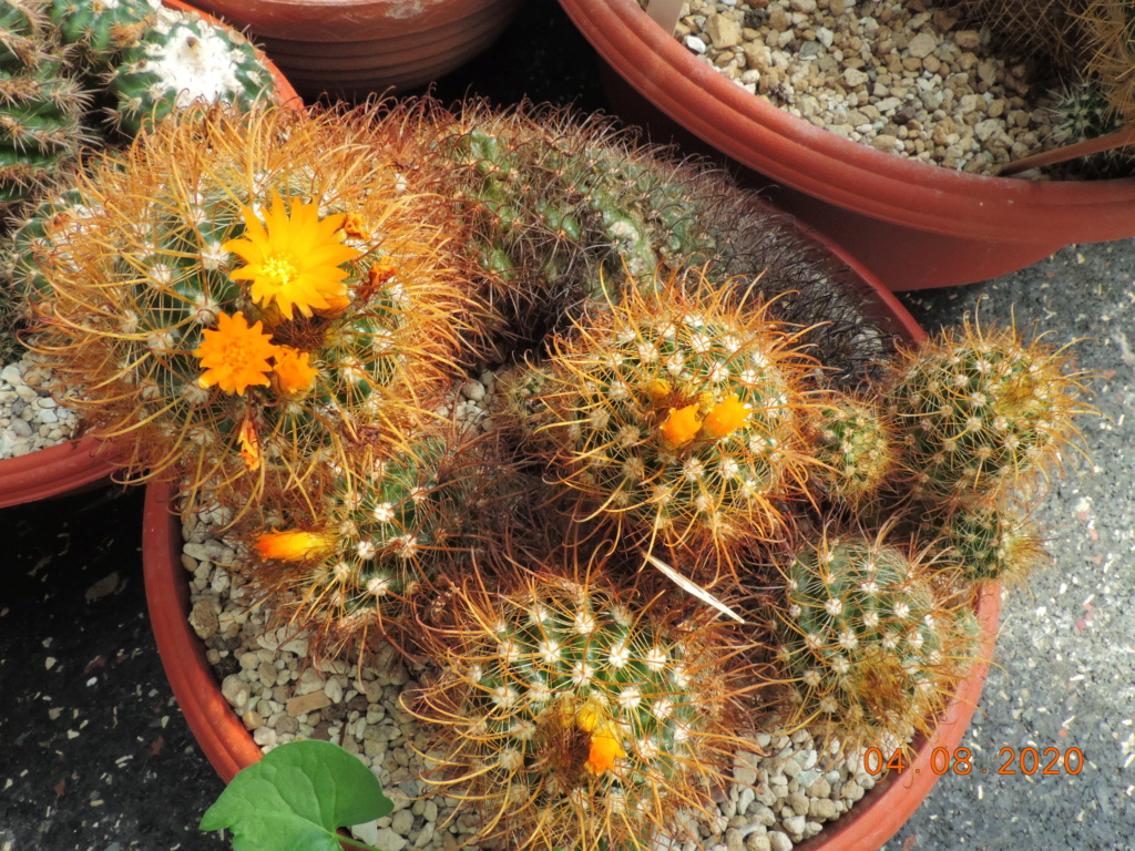 Cacti and Sukkulent in Köln, every day new flowers in the greenhouse Part 240 Bild5892