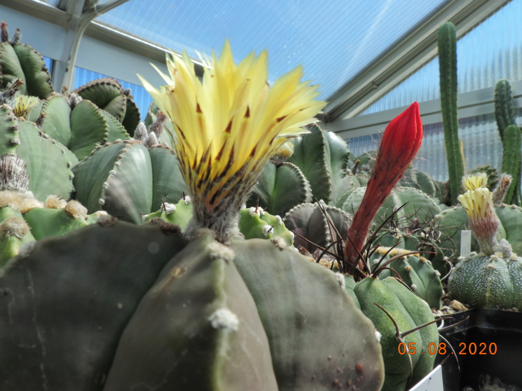 Cacti and Sukkulent in Köln, every day new flowers in the greenhouse Part 240 Bild5916
