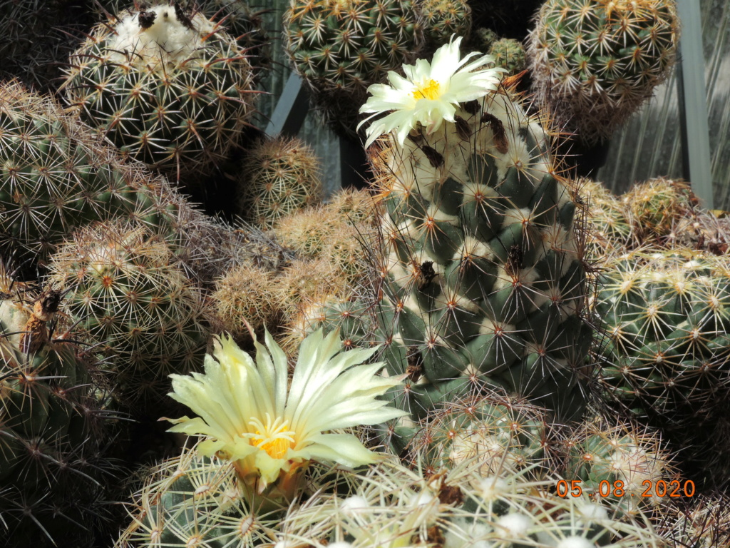 Cacti and Sukkulent in Köln, every day new flowers in the greenhouse Part 240 Bild5926