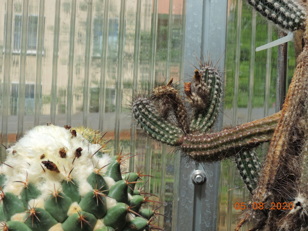Cacti and Sukkulent in Köln, every day new flowers in the greenhouse Part 240 Bild5928