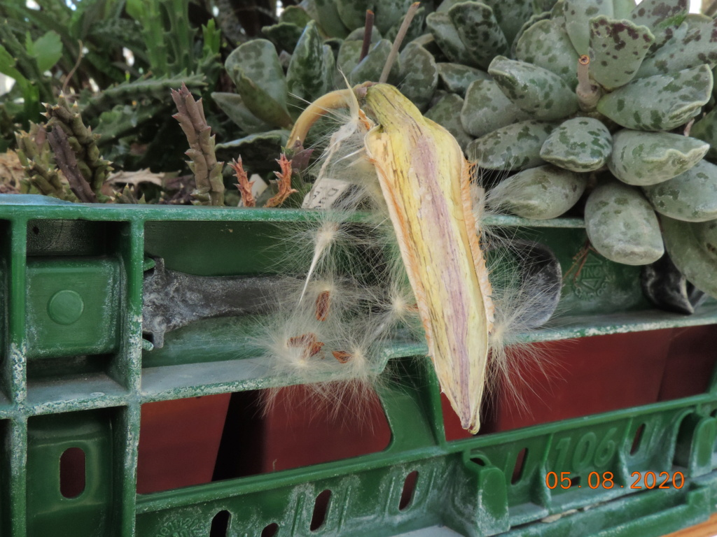 Cacti and Sukkulent in Köln, every day new flowers in the greenhouse Part 240 Bild5932