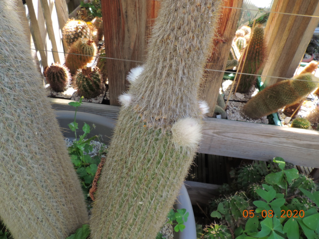 Cacti and Sukkulent in Köln, every day new flowers in the greenhouse Part 240 Bild5939