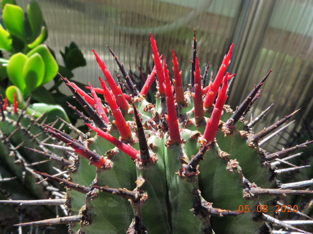 Cacti and Sukkulent in Köln, every day new flowers in the greenhouse Part 240 Bild5940
