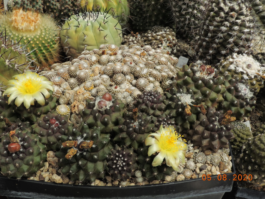 Cacti and Sukkulent in Köln, every day new flowers in the greenhouse Part 240 Bild5946