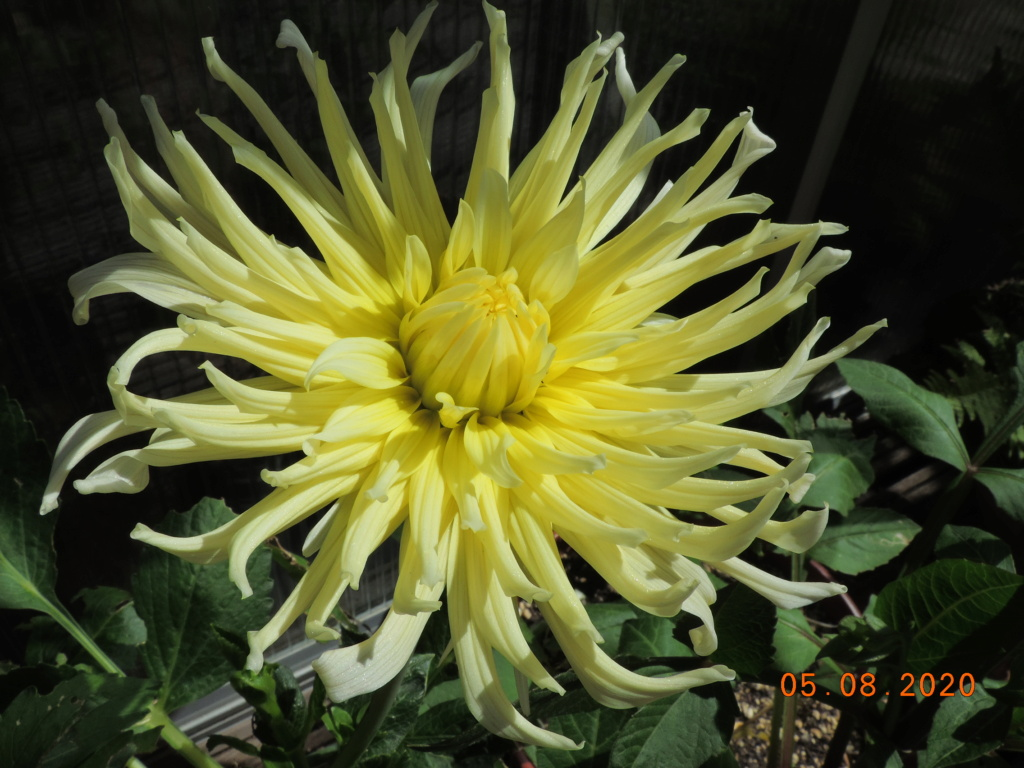 Cacti and Sukkulent in Köln, every day new flowers in the greenhouse Part 240 Bild5950