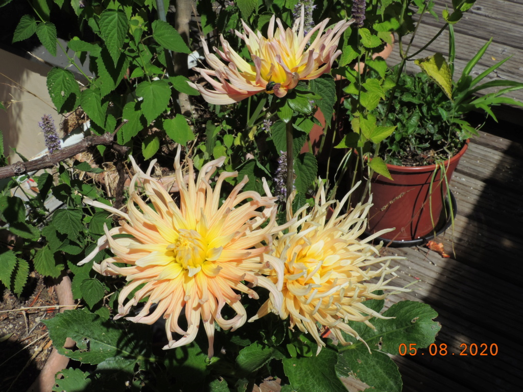 Cacti and Sukkulent in Köln, every day new flowers in the greenhouse Part 240 Bild5955