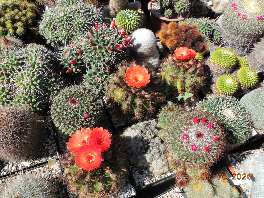 Cacti and Sukkulent in Köln, every day new flowers in the greenhouse Part 240 Bild5979