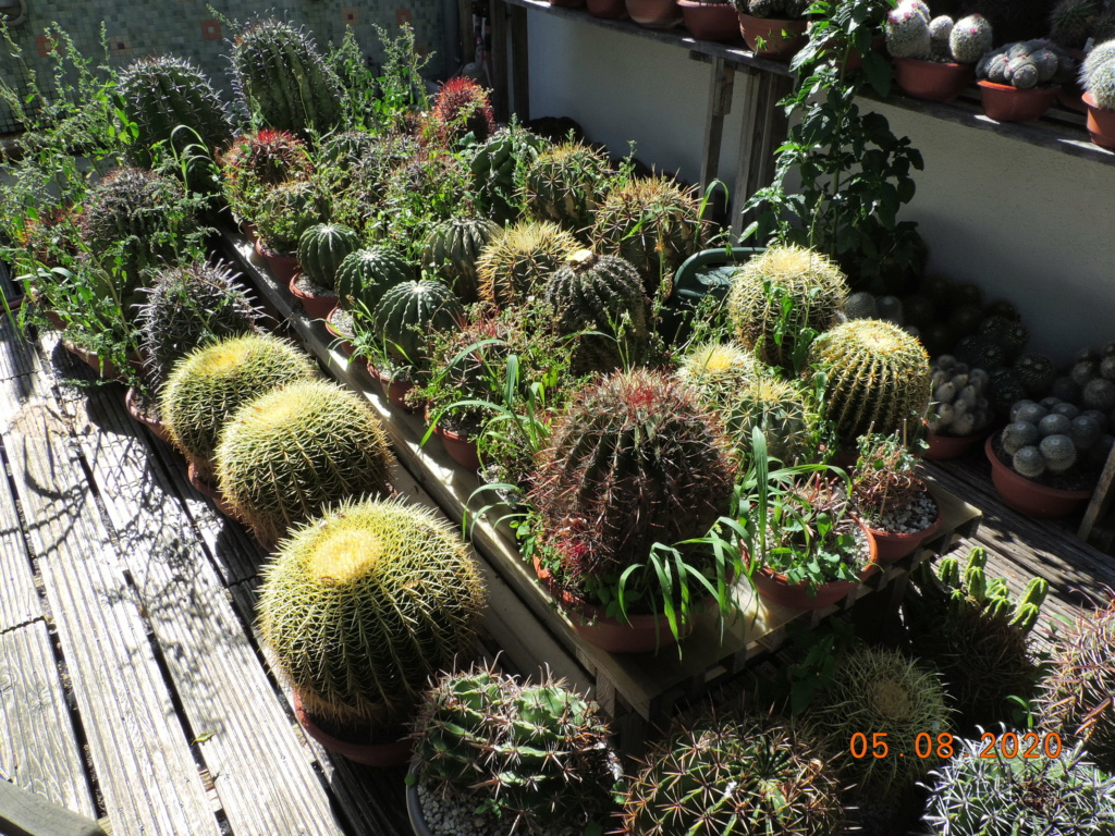 Cacti and Sukkulent in Köln, every day new flowers in the greenhouse Part 240 Bild5981